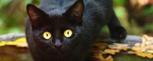 black-cat-300x121