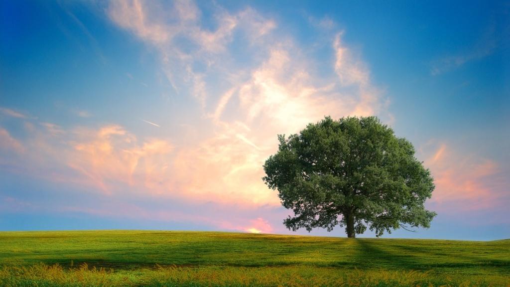fresh_nature-1280x720