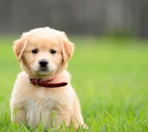 impossibly-cute-puppy-8
